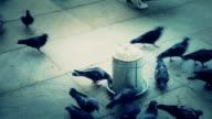 HD:Pigeons, **Slow Motion**, Istanbul, TURKEY video