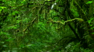 HD:Rain forest.(Panning shot) video