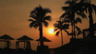 HD:Silhouette scene of coconut tree. video