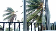 HD:Storm blowing coconut palm trees. video