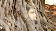 Head of Buddha at Wat Mahathat temple, Ayutthaya, Thailand video
