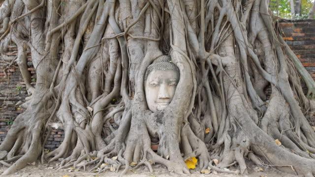 ZI Head of Buddha at Wat Mahathat temple, Ayutthaya, Thailand video