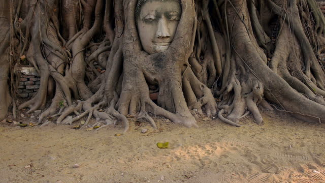 Head of Buddha Statue in the Tree Roots, Ayutthaya, Thailand video