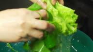 Healthy organic vegetables video