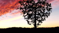 Heart shaped tree sways gently in the breeze at sunset video