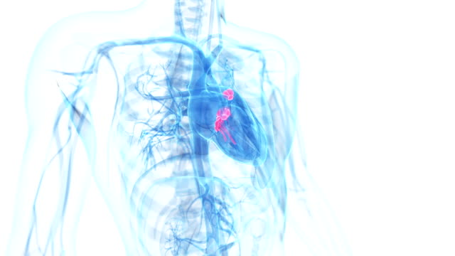 heart valves video
