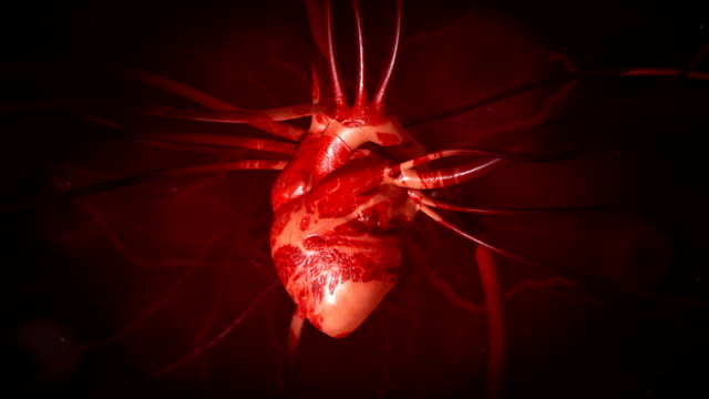 Heartbeat Close-up Animation with veins and arteries video