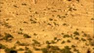 Heat haze effect in desert video