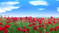 Heaven Poppys video