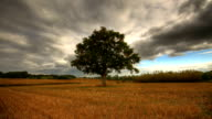 Heavy clouds over lonely tree hd time lapse video