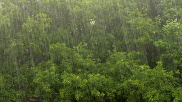 Heavy rain on a background of oak forest video