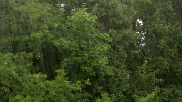Heavy rain on a background of trees. Linden, maple and oak video