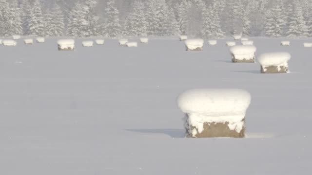 Heavy snow during the winter season in a rural area video