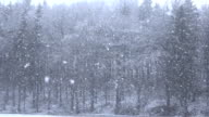 CLOSE UP: Heavy snow falling from the sky on tall trees and snowy plains video