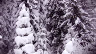 Heavy snow in forest video