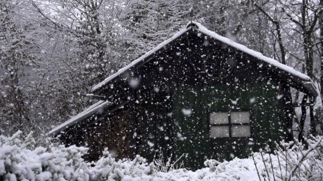 Heavy snow in woods video