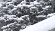 Heavy snow on ever green tree slow motion video