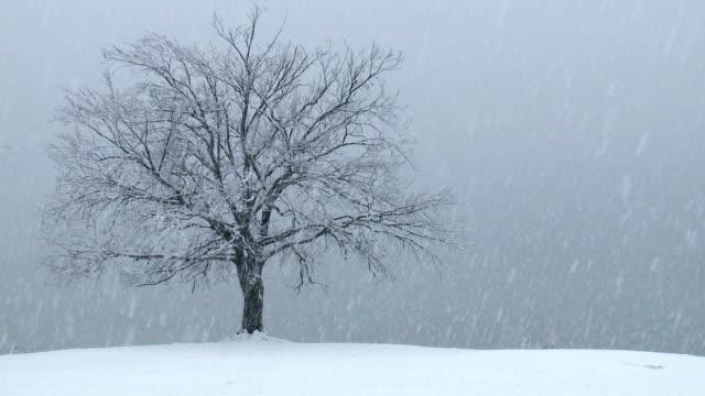 HD: Heavy snowing video