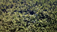 Hedge - Live Fence with bush elm video