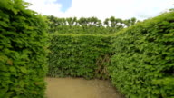Hedge maze video
