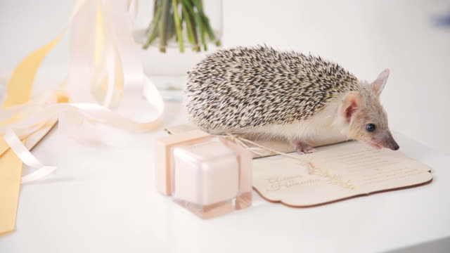 Hedgehog on table walks among decoration for wedding day video