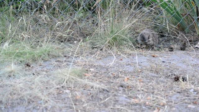 Hedgehog stands still and then walks away video