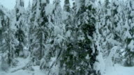 Heli Flying Through Winter Forest video