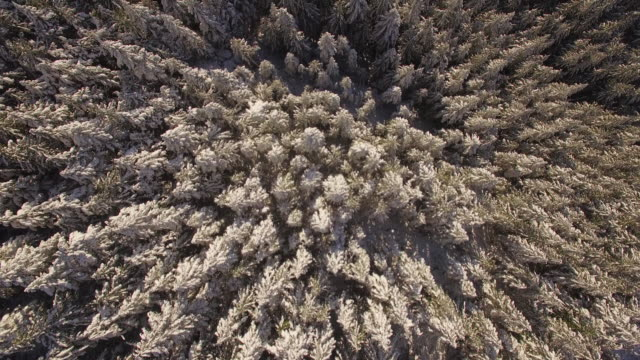 Helicopter Shot Above Mountain Forest Tree Tops Dusted with Winter Snow video