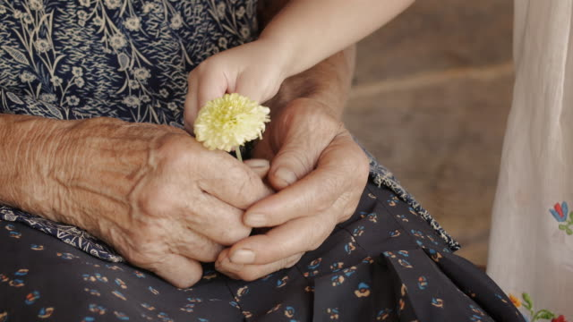 A Helping Hand-Little Girl Share Flower with Grandmother. Detail of a Child Hands and Senior Woman Hands. video