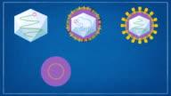 hepatitis A-B-C-D-E virus video