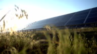 Herb and Solar Panel in field video