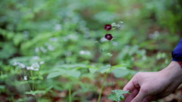 Herb picking in countryside - montage video