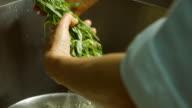 Herb under flow of water. video