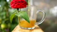 herbal tea being poured into a mug with a flower video