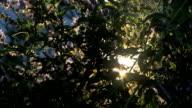 herbal video