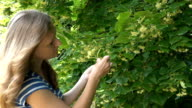 herbalist blond girl pick linden flowers herbs from tree branches video