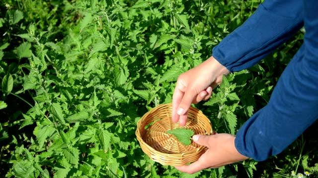 herbalist hand balm leaf video