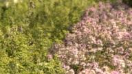 herbs video
