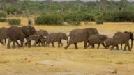 Herd of African elephants at waterhole in national park Hwankee video