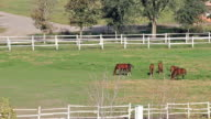 herd of horses in corral video
