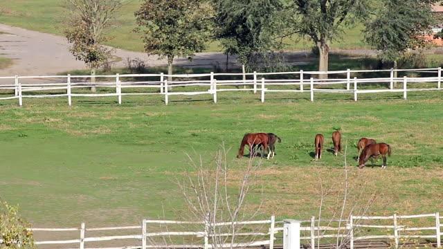 herd of horses in corral video