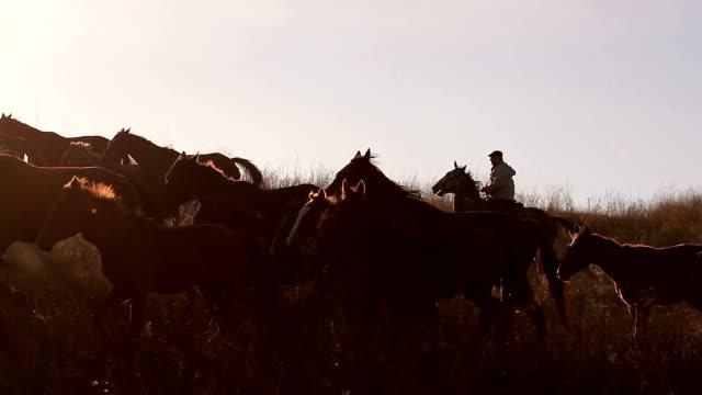 Herd of horses. video