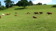 Herd video