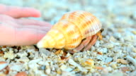 Hermit crab come back to the nature video