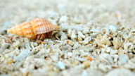 Hermit crab feel safe and walk again video