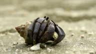 Hermit Crab on sand beach. video