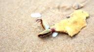 Hermit crab on the beach video