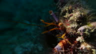 Hermit Crab, undersea, Pacific Ocean, Taiwan video