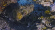 Hermit Crab video