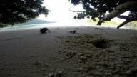 Hermit crabs video